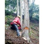 有限会社 原見林業