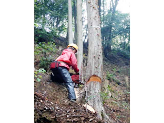 原見林業 女性従業員