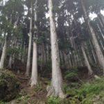 マルカ林業 株式会社
