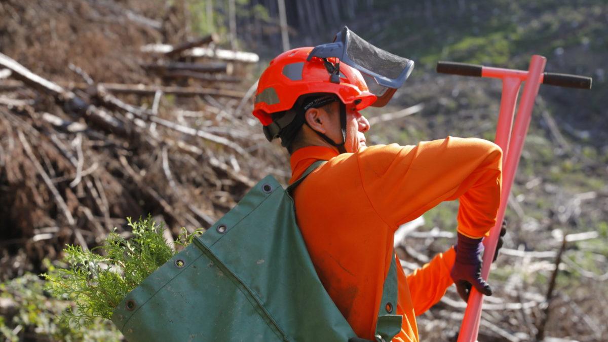 自然と共に生きる、林業という選択肢